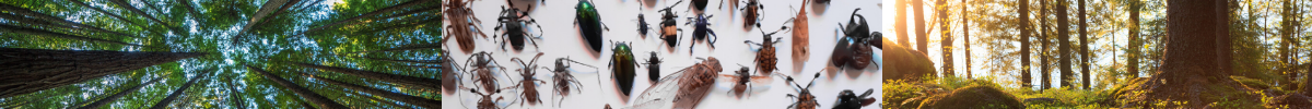 Footer Image of forest environments and insects