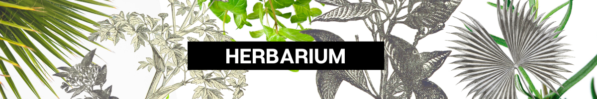 Herbarium Banner