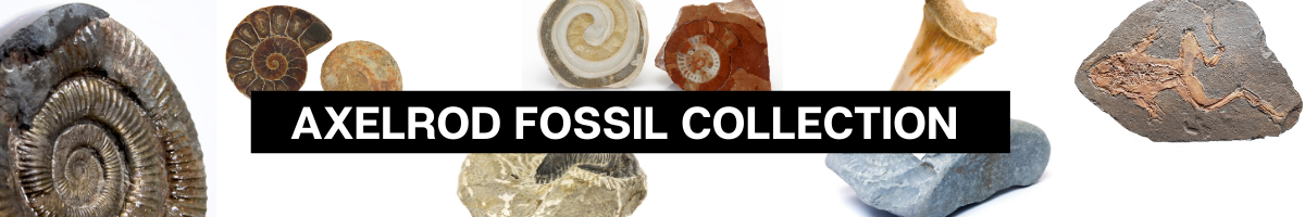 "Banner with fossils on it stating ""Axelrod Fossil Collection"""