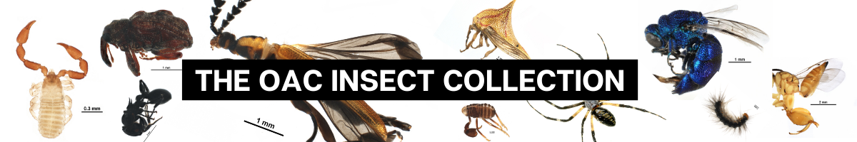 Banner introducing the Insect Collection
