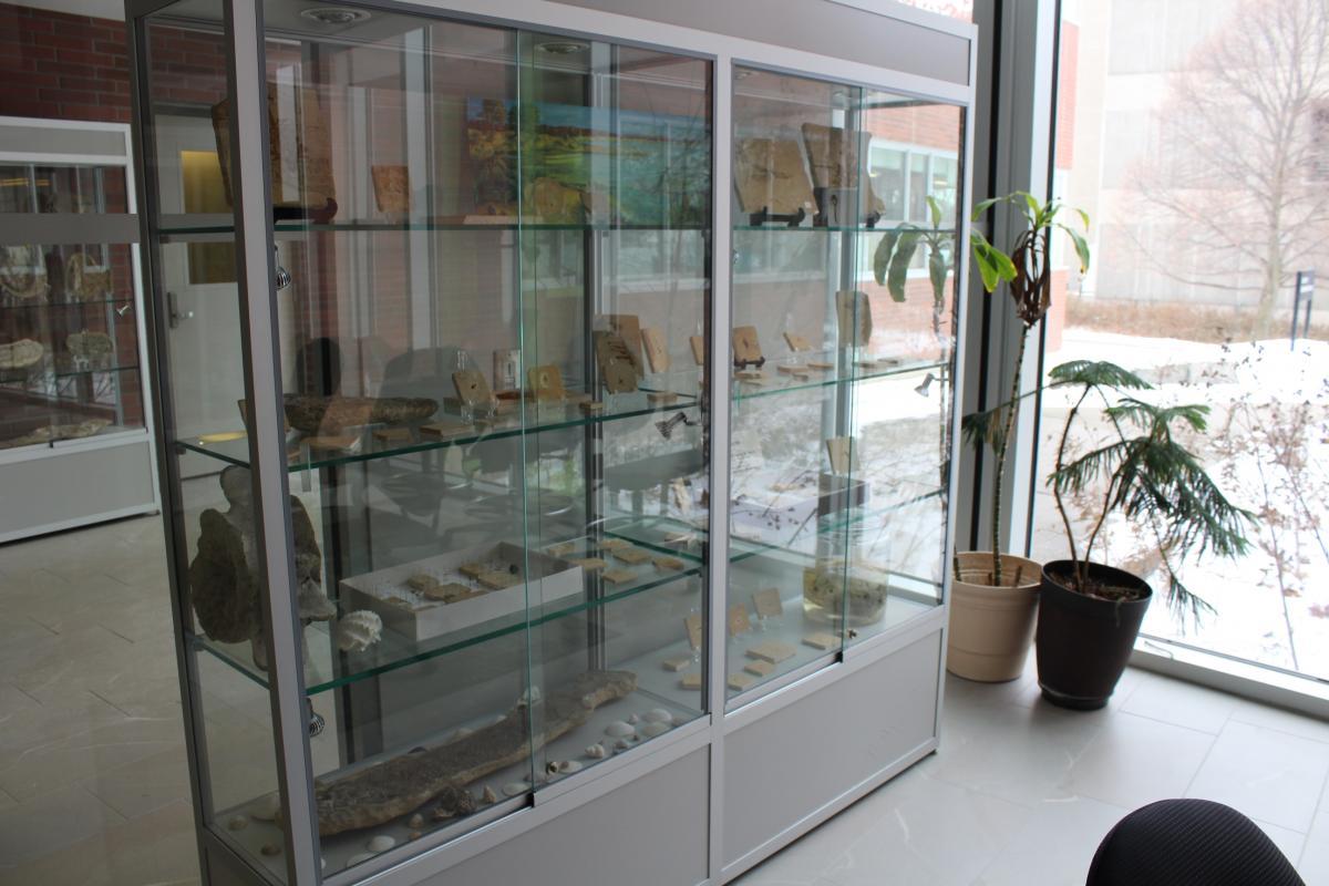 Image of fossil showcase in BIO
