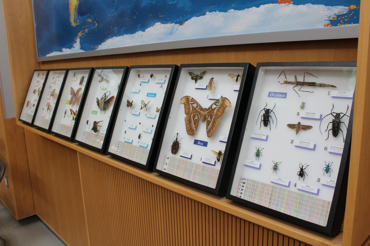 Image of pinned insects in the Atrium of BIO