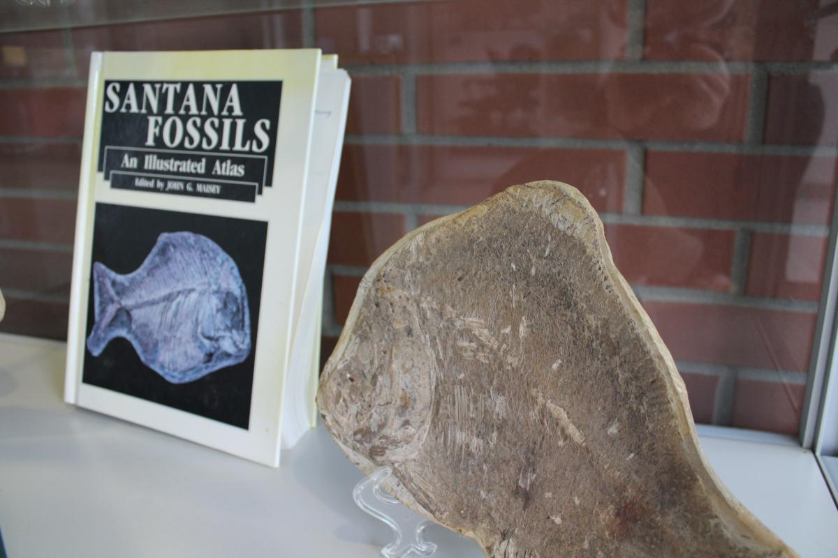 "Fossilized fish next to textbook of ""Santana Fossil Formation"""