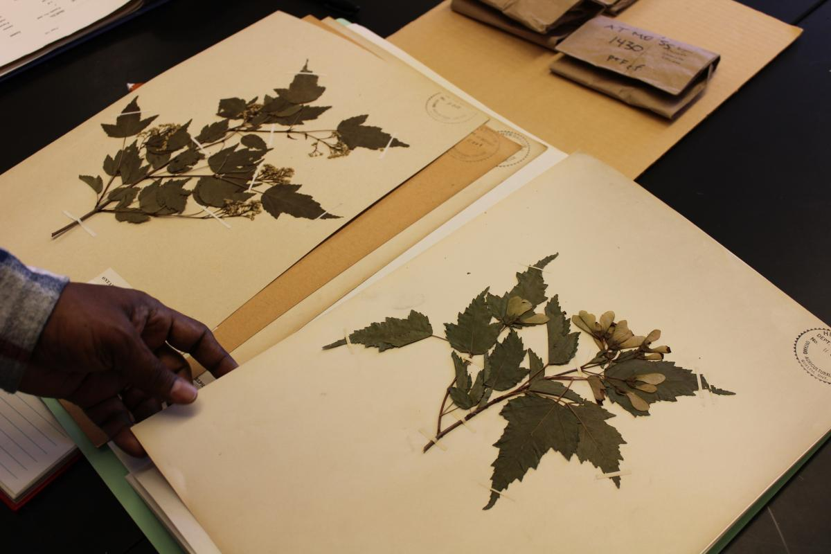 Image of pressed flowers being handled