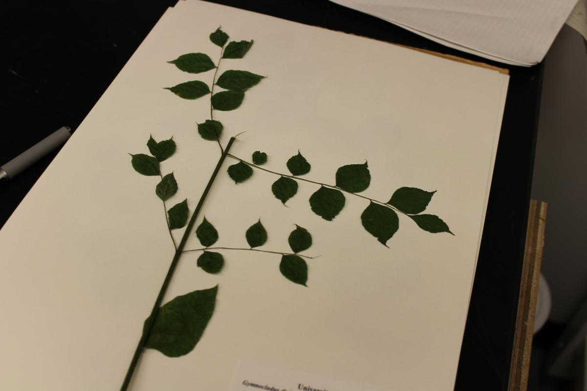Image of a fresh plant specimen.