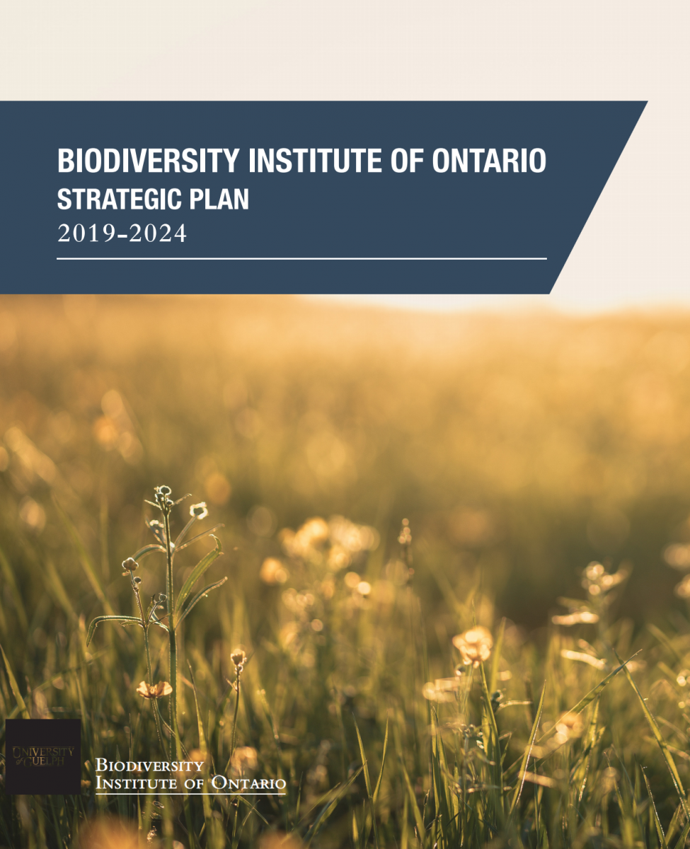 Image introducing guelph's Strategic Plan