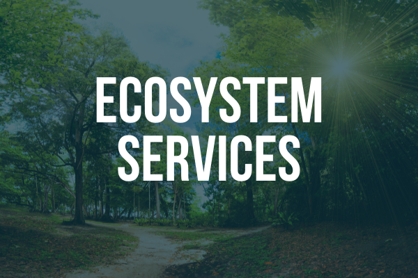 "Image with text stating ""Ecosystem Services"